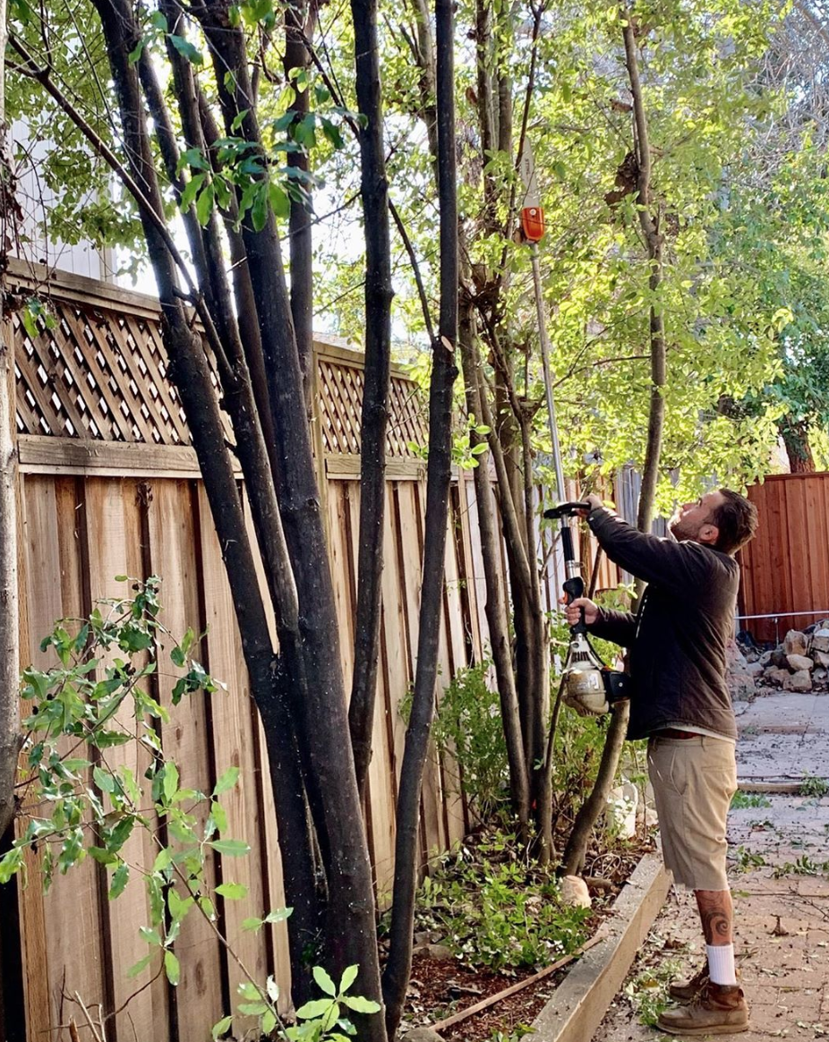Are you ready for spring? How to prune in winter