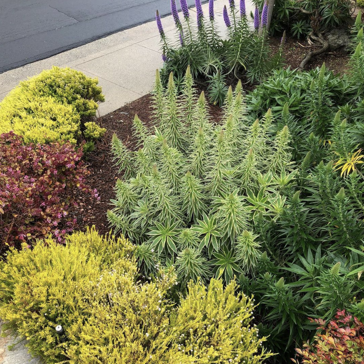 Grouping plants that have similar needs